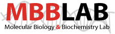 MBBLAB.net